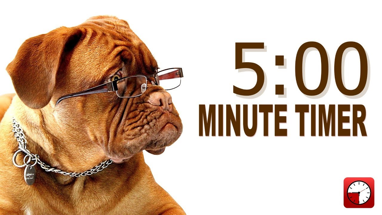 5 minute timer for powerpoint and school alarm sounds with dog