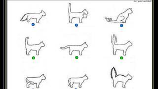 Настроения кошки могут быть признаны за хвост. Хвост позы кошки.