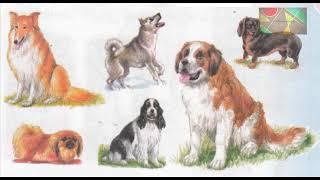 """Окружающий мир 1 класс ч.1, Перспектива, с.74-75, тема урока """"Собака в нашем доме"""""""