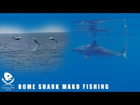 Roma Un Altro Squalo Mako Amazing Shark Jump Youtube