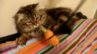 my siberian cat with her mouse
