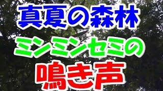 クワガタムシとカブトムシ(nokogirin:ノコギリン )です。 今日の動画...
