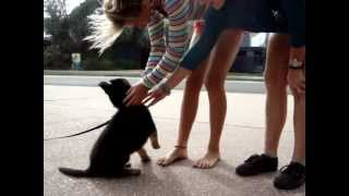 The Canine Classroom Puppy & Dog Training - Puppy Socialisation