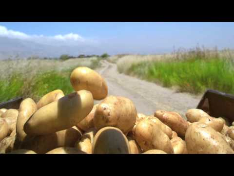 VivaCell-MTS supports the Armenian Agriculture 03