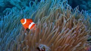 Wonderful underwater world  part One- Asia  Cudowny podwodny świat część1 -Azja