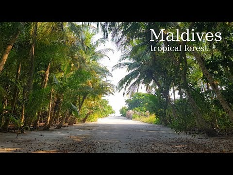 Flora of the Maldives. Tropical forest and plants. (Fodhdhoo. Maldives)