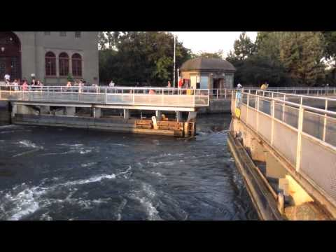 2014 08 02   шлюзы в Seattle  возле Пашиного дома Ballard Locks