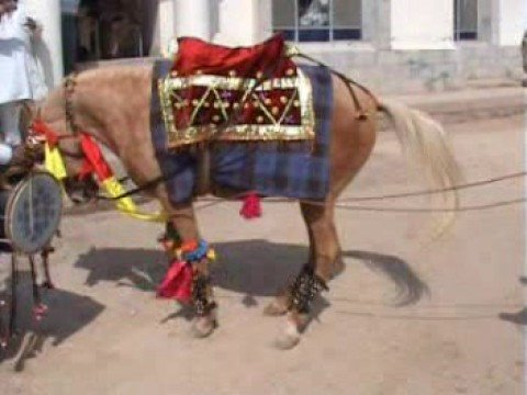 Katasraj, Dancing Horse, Chakwal, Sargodha, Pakistan
