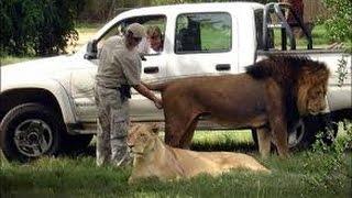 Веселые животные.  Эротический массаж.
