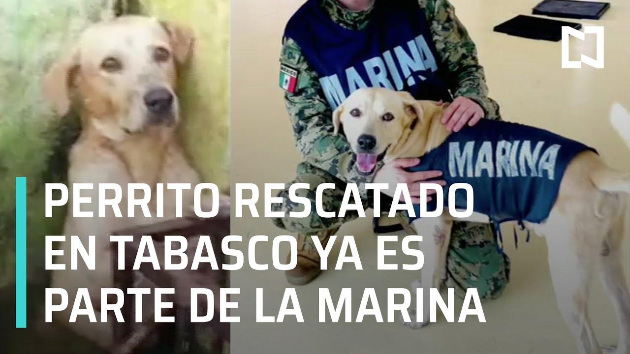 Perrito rescatado en Tabasco ya es miembro de la Marina - Las Noticias