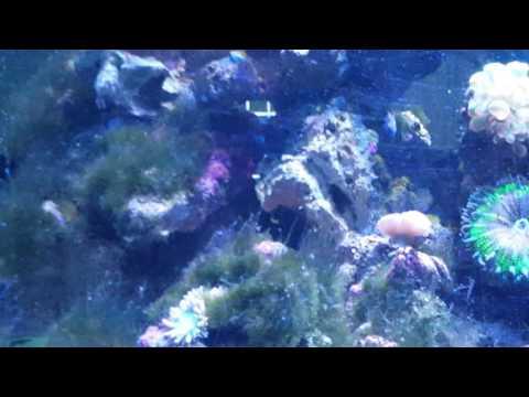 Lots of fish activity...  and a rare sighting(1)
