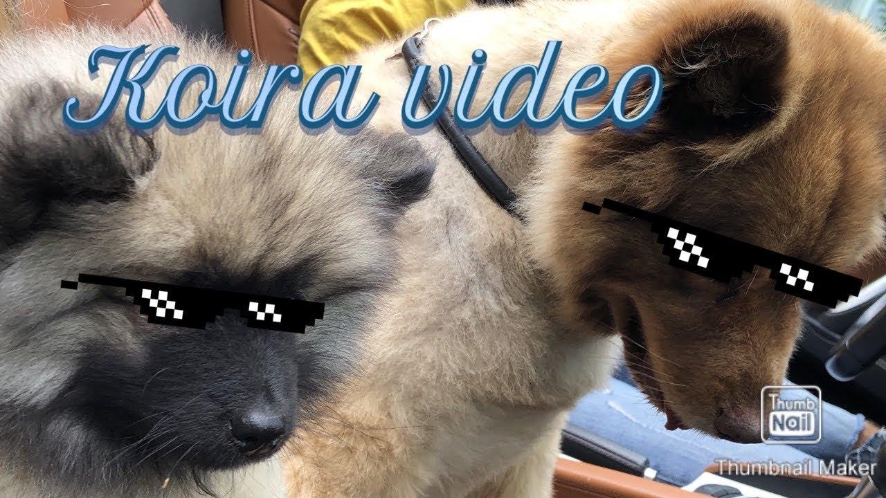 Koira Videot