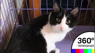 В Мытищах зоозащитники провели операцию по спасению котов