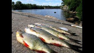 Супер рыбалка в Запорожье после работы!!! Голавль на кузнечика и ЧАйКА на бомбарду! 9 серия