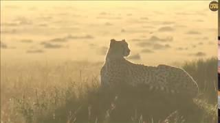 """~ """" GEPARD """" w blasku wschodzącego Słońca i mgle ~ Afryka - Safari"""