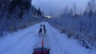 Катание на собачьих упряжках СНЕЖНЫЕ ПСЫ Дети Севера