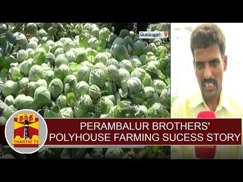 Perambalur Brothers' polyhouse farming success story | Thanthi TV