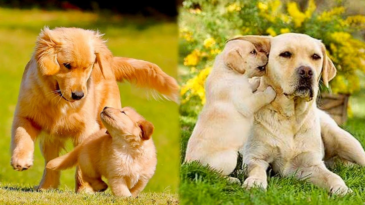 Animals Mothers - beautiful, happy and meaningful moment of animal family #2