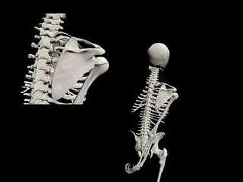 biomecánica-de-la-cintura-escapular