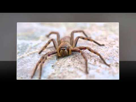Spiders | Scottsdale, AZ - Alliance Pest Management