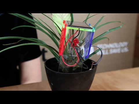 Make with DIY Thirsty Plant Kit
