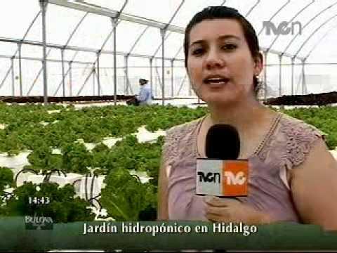 Jard n hidrop nico en hidalgo youtube - Jardin hidroponico ...