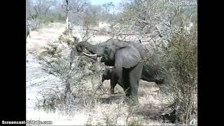 Botswana / Afryka Płd. - słonie