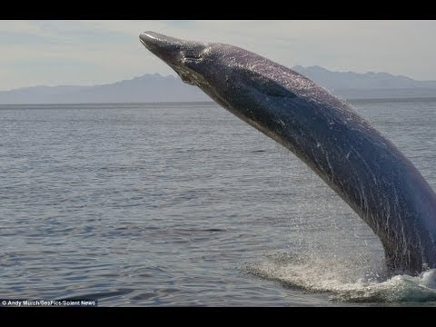 Bryde's whale - Nomasa series