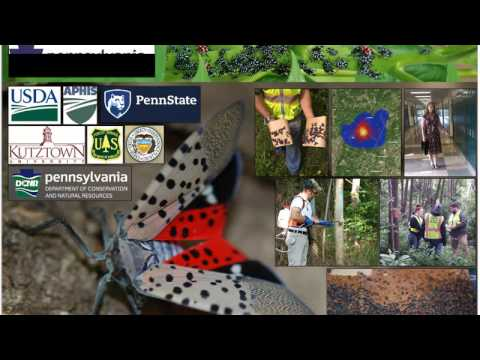 Update on the Spotted Lanternfly in Pennsylvania  (Oct 2016)