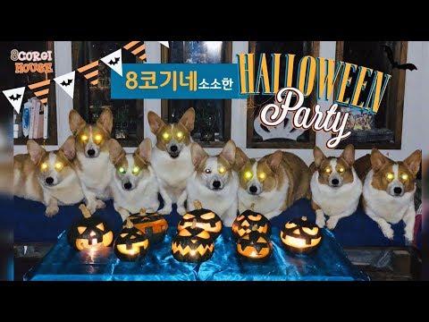jack-o'-lantern-for-halloween!!-[8corgi-house]