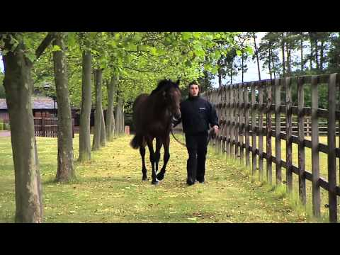 #DubaiRacing- Mukhadram At Shadwell Stud