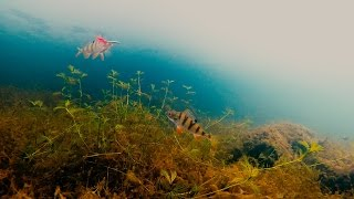 Зимняя рыбалка. Ловля окуня на блесну и балансир. Подводные съемки(Зимняя рыбалка 2016-2017 с подводной камерой. Ловля окуня на блесну и балансир. Подводные съемки на зимней рыбал..., 2016-11-03T08:17:19.000Z)