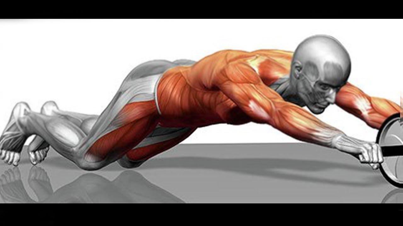Resultado de imagen de rueda abdominal