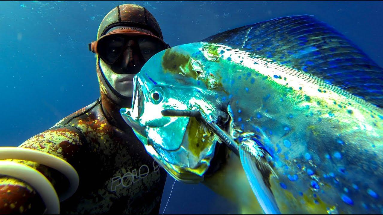 Spearfishing for Mahi Mahi / Dolphin fish? What you NEED to know!