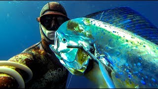 Spearfishing for Mahi Mahi / Dolphin fish? What you NEED to know!