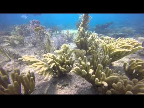 Nursery Reef - Pompano Beach Florida