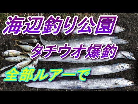 海辺つり公園 釣り 近くの秘密の堤防2  福浦岸壁 より釣れる? タチウオ爆釣!