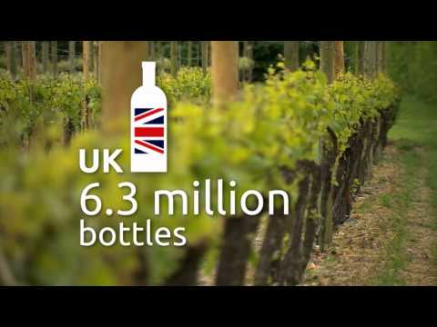wine article  English wine is forecasting great growth in wine production