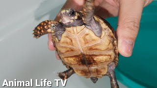 ?turtle go swimming with frien…