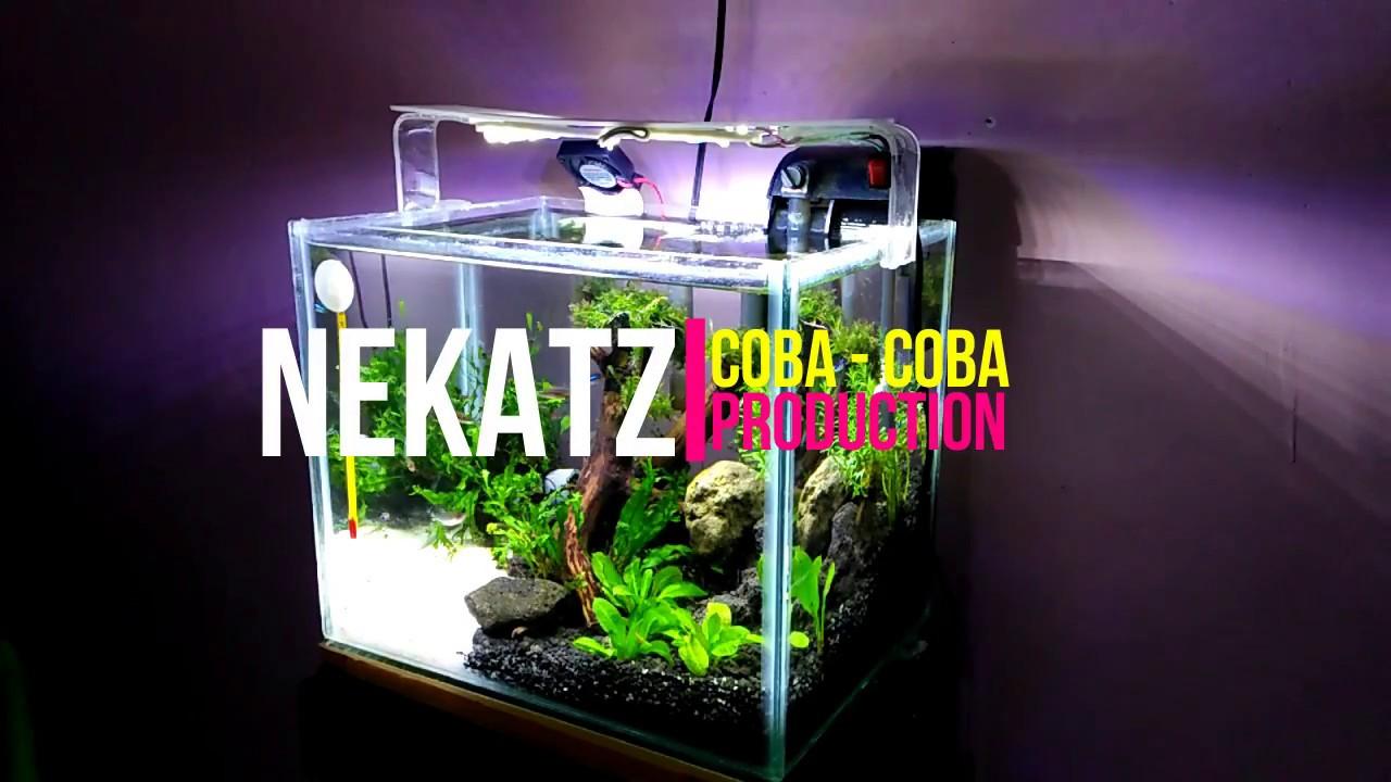 Membuat Merakit Aquascape Sederhana Murah Mudah Youtube Ziolite Aquarium Dan