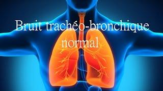 Bruit trachéo-bronchique normal