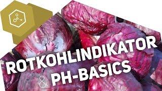 Wie funktioniert der Rotkohlindikator? + pH-Basics