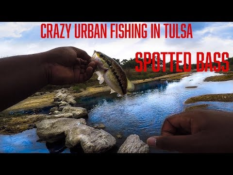 Fishing Tulsa Urban Ponds And Creeks! Crazy Pools Of Fish In Dried Up Creek Bed!