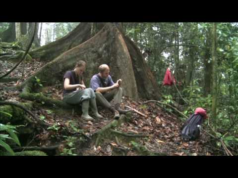 A Day in the Life of Danum Valley Field Center (DVFC)