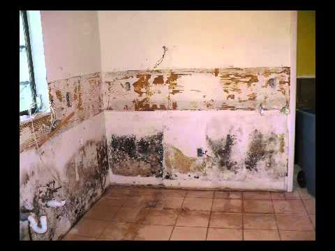Mold Remediation Service Cold Spring Harbor Ny Carpet Cleaning Service