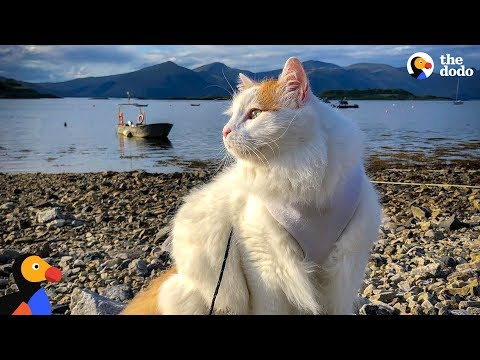 Cat And His Family Live Together On A Sailboat - SALTY | The Dodo