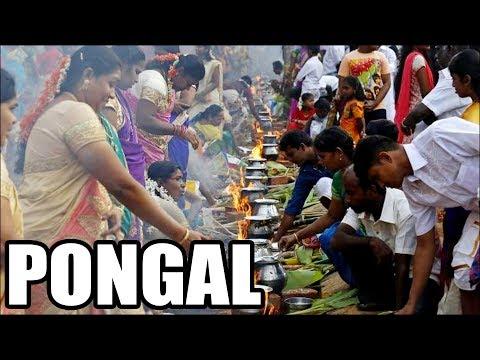 பொங்கல் | θaɪˈpoʊŋʌl |PONGAL | Harvest Festival of South India | Tamil Harvest Fest | Hindu Rituals