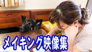 grandchild and German Shepherd dog 普段の撮影動画で紹介出来なかった...