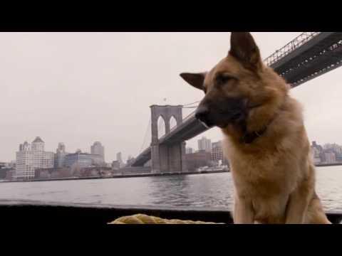Cool Dog - Rintintin a New York - Trailer