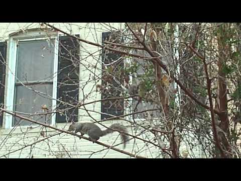 POTOMAC GARDENS (DA HOOD ON CAPITOL HILL (PENNSYLVANIA AVE. SE,)